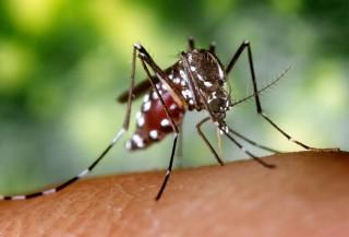 ¡Olvídate de las picaduras de mosquito!
